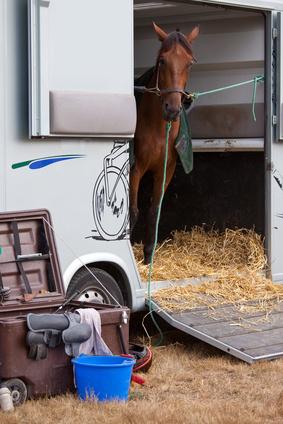 Le cheval attend sont entraîneur dans son box avant la course.